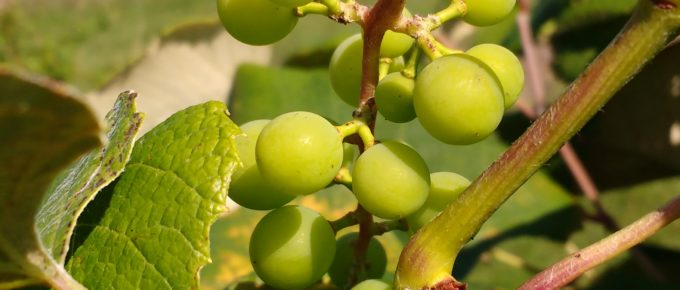 Going Deeper–A vineyard study, part 1–INTIMACY